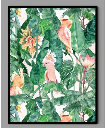 Plakat A3 papugi